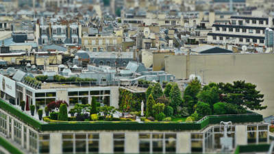 Urban Gardening in Form einer Dachterrasse mit Rasen und Bäumen