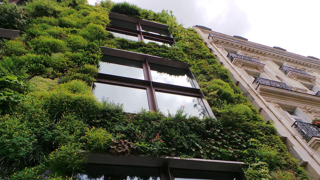 Begrünte Fassaden sind nicht nur schick, sondern auch klimafreundlich.