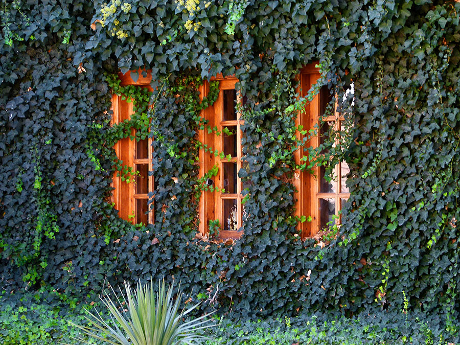 Urban Gardening boomt besonders im städtischen Bereich.