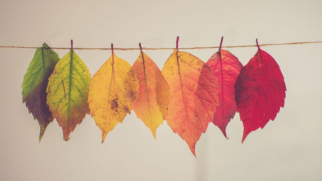 Die herbstliche Farbenvielfalt spiegelt sich heuer auch in den Wohnräumen und auf den Laufstegen wider.